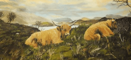 highland cows © Margaret Maclean